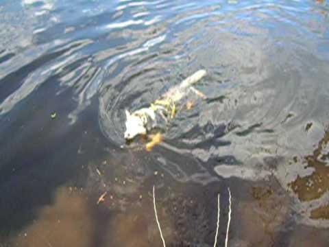 Tunda Linda swimming in Neponset River
