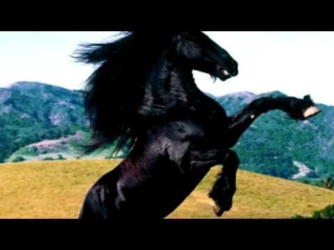 Imao sam konja vrana