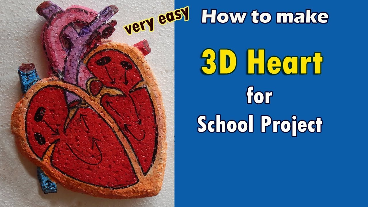 3d Model of Human Heart - School Project - Science Project - Artway 55