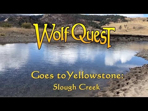 WolfQuest Goes to Yellowstone: Slough Creek