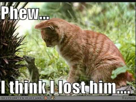 Cheezburger Cat Videos
