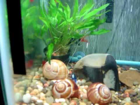 10 gallon aquarium September 6 2010 video # 3