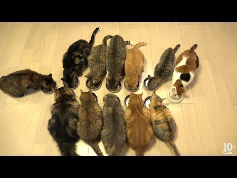10 Cats.+ 食べてもまだ食べたい12匹の猫