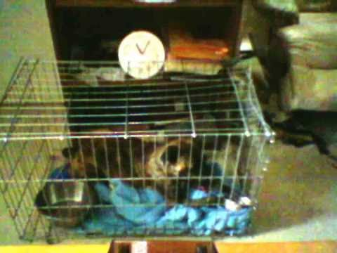 Neko Escapes from his Cage
