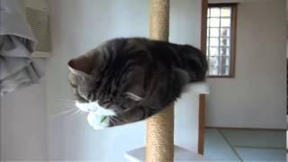 Смешной кот / ★ 2013-14