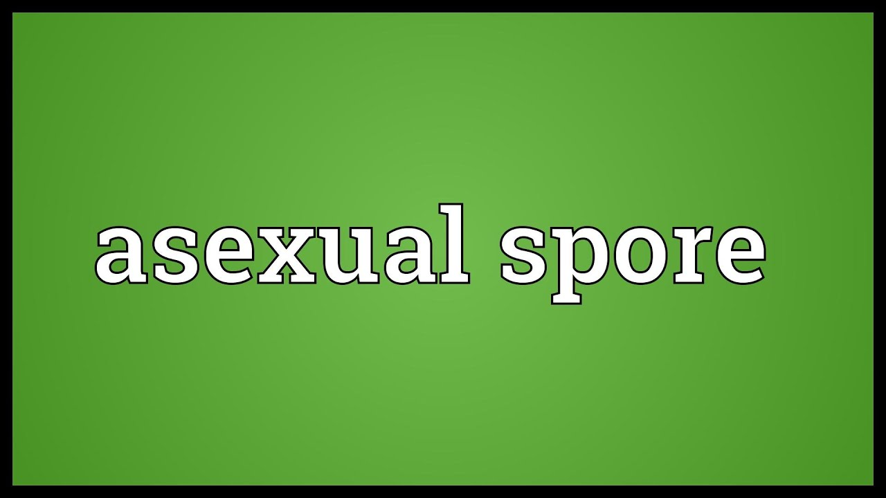 Budding asexual definition dictionary