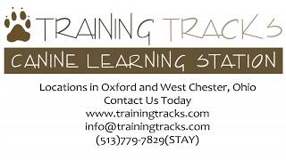 Teach your Dog to Come When Called | Cincinnati Dog Training