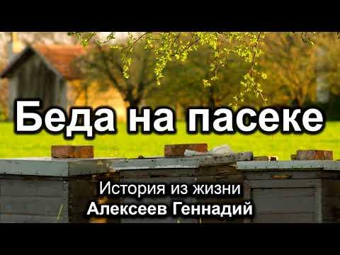 Беда на пасеке. Алексеев Геннадий. Истории из жизни. МСЦ ЕХБ