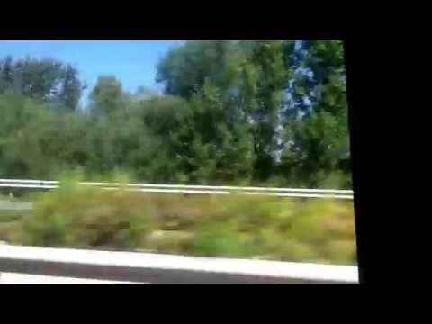 bushes covering freight train in Hungary