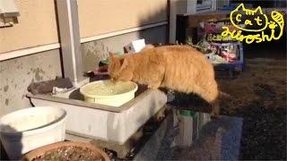 ゆったりな時間を過ごす猫たち。 平和だ〜 ※ひろしのグッズ作ってみたの...