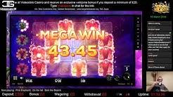 Pink Elephants Mega Win | Thunderkick | Videoslots Casino