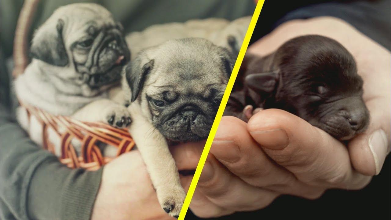 como eliminar garrapatas en cachorros recien nacidos