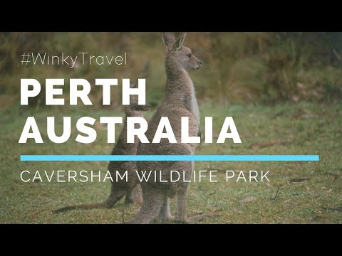 What to do in Perth-Caversham Wildlife Park | WinkyTravel 【澳洲-珀斯旅游自由行——凯维森野生动物园】