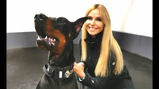 THE DOBERMAN - FULLY TRAINED PROTECTION DOG