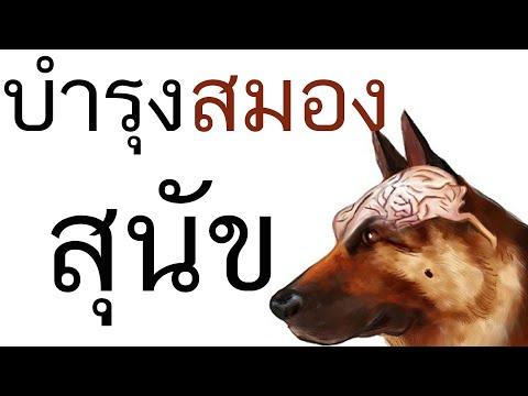 บำรุงสมอง ในสุนัข อาหารเสริมสุนัข pantip ยาบำรุงสมองสุนัข ยาบำรุงประสาท สุนัข ยาบํารุงข้อสุนัข