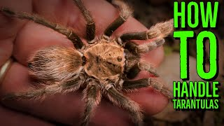 How To Handle a Tarantula / Top 10 Tarantulas for Handling