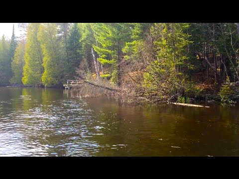 Fly Fishing The Holy Waters Of The Au Sable
