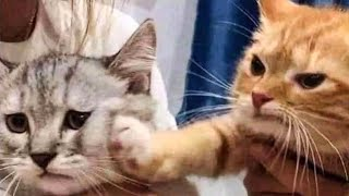 Cute Cats And Dogs Reactions  Animals Doing Funny Things