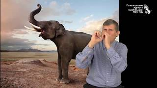 """""""Животные великаны"""" - слайд-фильм для глухих и слабослышащих журнал Светильник №9 2014"""