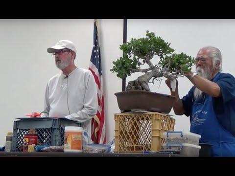 Al Nelson on California Oak Bonsai