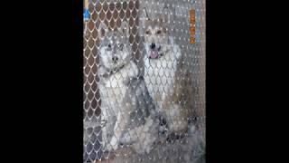 Фото-видео клип  Дар,Боя,Юта 26 09 2018