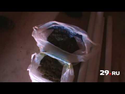 В Новодвинске нашли наркоферму