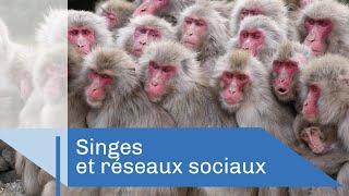Comment la culture se transmet chez les singes | Reportage CNRS