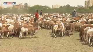 ارتفاع أسعار الأضاحي في السودان