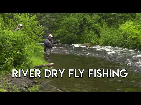 Dry Fly Trout | New Hampshire Fishing