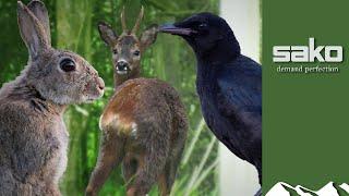 Buck, bunny and crow hunt
