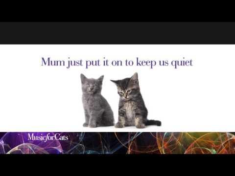 Music for Cats kitten video