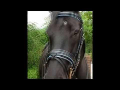 Equestrian Exporter |  Saddlery Exporter  |  Horse Riding Equipment Supplier | Tack Shop Supplier