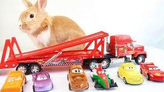 ТАЧКИ. Кролик Чуча и Молния Маквин. Кролик играется ТАЧКАМИ.