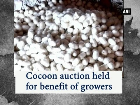 Cocoon auction held for benefit of growers - ANI News