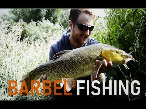 Barbel Fishing -  Nearly Lost My Rod!