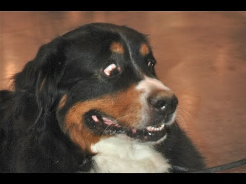 Funny Dogs Scared of Farts Compilation 2015