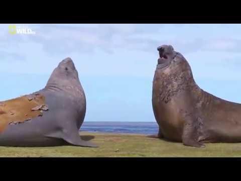 Удивительные существа (Морские