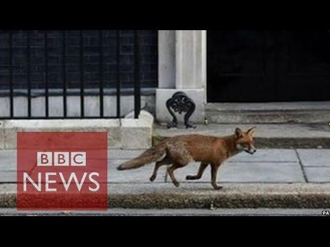 street fox matchmaking