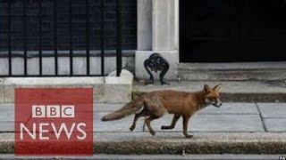 Fox makes a bid for Downing Street - BBC News