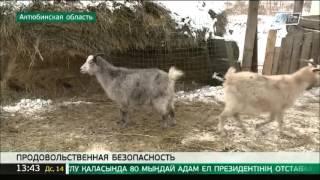 Урожай клубники круглый год собирает предприниматель из Актюбинской области(, 2015-12-14T07:56:31.000Z)