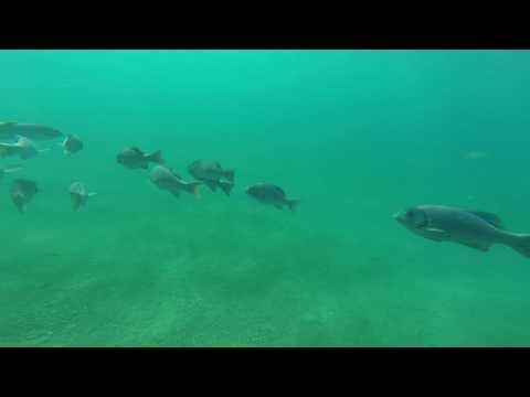Galapagos snorkeling Adventures