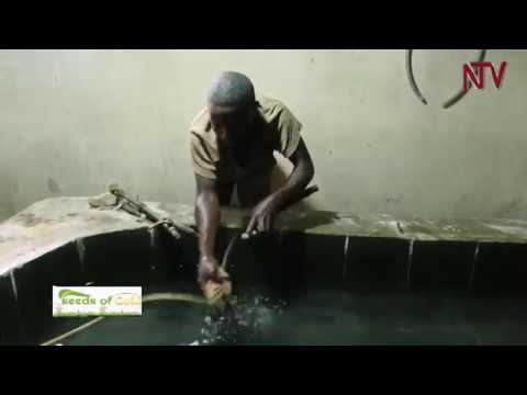 Seeds of Gold: Fish Farming