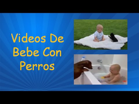 Videos De Bebe Con Perros | Videos Bebes Graciosos