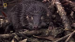 National Geographic HD , дикая природа в хорошем качестве , животные , леса , горы , реки .