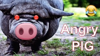 Angry Peppa pig ★ 7 Seconds of Happiness ★ FUNNY 😂
