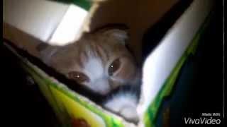 кот в коробке (Смешное Видео)(, 2015-10-10T11:35:48.000Z)
