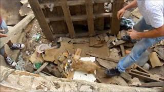 Resgate de filhotes presos em casa abandonada - Osasco/SP (31/01/12)