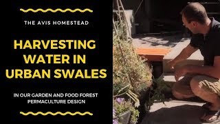 Harvesting Water in Urban Swales In Our Garden and Food Forest: Permaculture Design