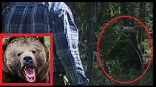 Медведь пытается атаковать человека в лесу Швеции