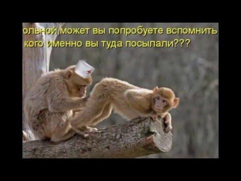 Картинки: приколы про животных с надписями!